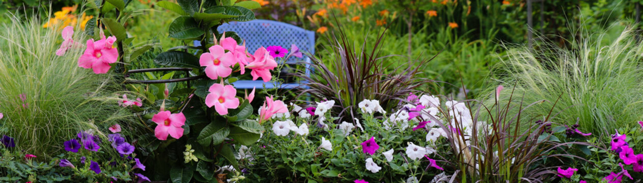 Horizontal banner with a focal point of a blue bench, a garden sanctuary, Gardenscape incorporating flowers that are hot pink, fuchsia, oranges