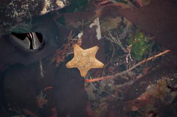 Starfish in Rock Pool