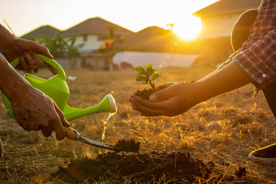 couple hands prepare the tree planting. in to the soil in the garden as save world concept,nature,environment and ecology