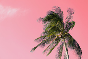 Foto op Plexiglas Candy roze Coconut palm tree on an abstract pink background. Tropical natural background