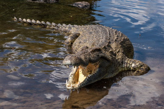 HIGH ANGLE VIEW OF crocodile in river