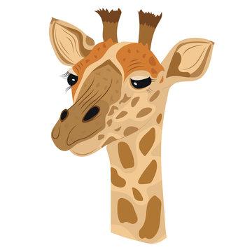 Vector giraffe isolated white background