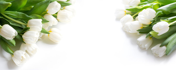 Bouquet of white tulip isolated on white background. Close up. Fototapete