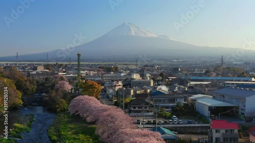 Wall mural Flying on row of cherry blossoms trees and fuji mountains in Shizuoka, Japan.