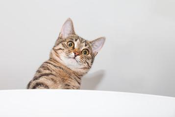 Curious cat face peeps out