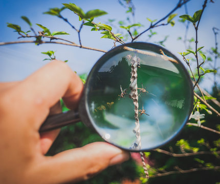 Cropped Hand Holding Magnifying Glass On Bees Flying By Plant