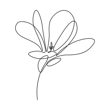 Magnolia flower in continuous line art drawing style. Minimalist black linear sketch isolated on white background. Vector illustration