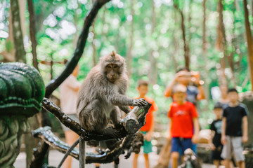 A wet Monkey sits on a branch near the fountain. Tourists take pictures of monkeys. Monkey forest in Ubud. Most visited place in Ubud