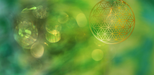 Blume des Lebens in lichtvoll vegetativem Ambiente als Symbol für vollkommene Gesundheit und natürliche Regeneration