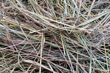 Hay closeup for background. Animal feed.