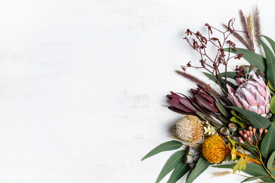 Beautiful flat lay floral arrangement of mostly Australian native flowers, including protea, banksia, kangaroo paw eucalyptus leaves and gum nuts on a white background. Space for copy.