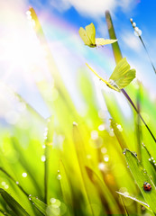 Fototapete - Abstract Spring background;  fresh green grass and fly butterfly against sky background