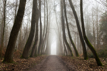 Acrylic Prints Nature Forest walk during a misty morning in the Palingbeek in Zillebeke - Ypres.
