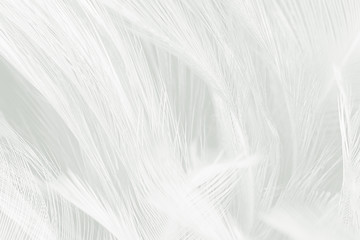 Wall Mural - Beautiful white feather wool pattern texture background