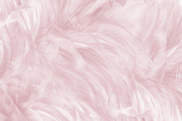 Wall Mural - Beautiful violet - caral blush colors tone feather texture background, trends color