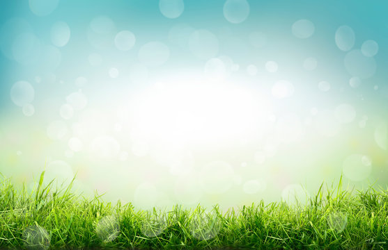 A natural spring garden background of fresh green grass and blurred blue sky bokeh