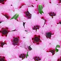 Papaver seamless pattern. Bright pink summer background