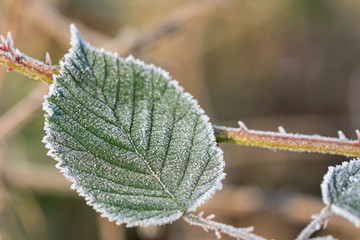 Closeup shot of a frozen green leaf in winter covered by beautiful ice crystals