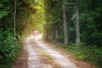Wall Mural - Red car on country road in wild fir forest