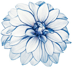 Poster Dahlia white-blue flower dahlia on white isolated background with clipping path. no shadows. Closeup. Nature.