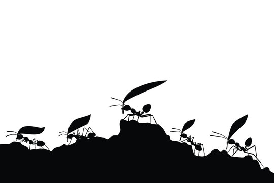 working ants with leaves silhouette vector