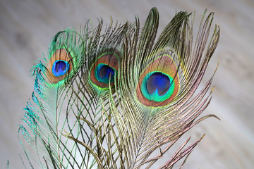 Colorful peacock feathers . Close-up image.