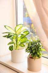 Beautiful potted plants on window sill at home