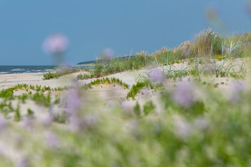 Fototapete - Wild grass on Baltic sea beach in summer.