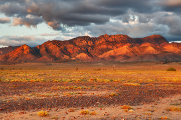 Acrylic Prints Coral Western Range of Wilpena Pound in evening light