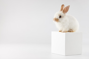 Bunny rabbit at white cube on white background
