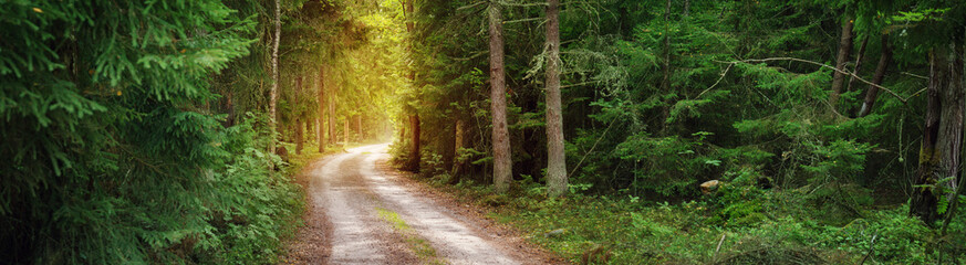 Keuken foto achterwand Weg in bos Lahemaa national park forest panorama