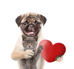 Pug puppy hugs kitten and holds heart in it paw. Valentines day concept. isolated on white background