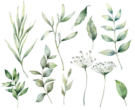 Set of watercolor spring branches and herbs. Hand painted eucalyptus leaves and grass isolated on a white background. Floral illustration for design, print, fabric, or background. Botanical set.