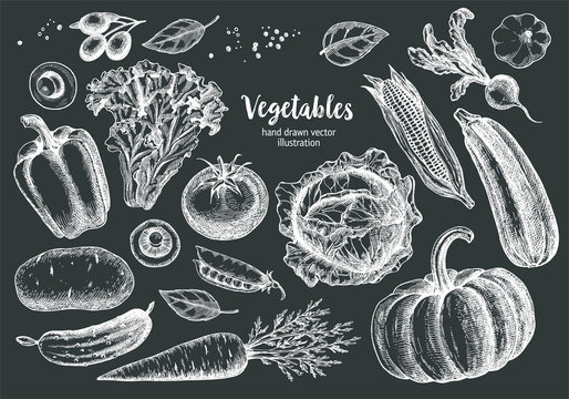 Vegetables Collection With Sketch or Hand Drawn Style on Blackboard Background