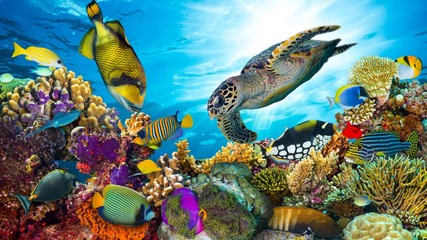 Spoed Fotobehang Koraalriffen colorful coral reef with many fishes and sea turtle