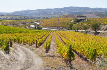 UNESCO World Heritage, the beautiful endless lines of Douro Valley Vineyards, in Vila Nova de Foz Coa, Portugal.