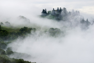 View of fog over mountain in Redwood National and State Park