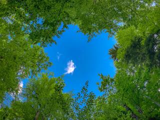 Blick durch die Baumkronen eines Waldes