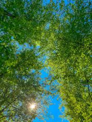 Sonnenstrahlen durch das Blätterdach eines Waldes