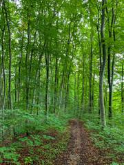 Ein Waldweg lädt zum Entspannen ein