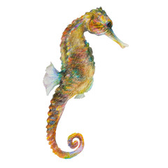Multi-colored seahorse. Hippocampus. Watercolor illustration, colored with crayons. Isolated