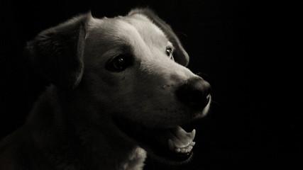 Foto contraste mascota