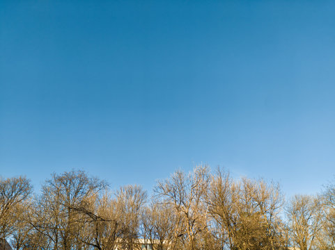 Clear cloudless blue sky and leafless trees on the sunny day