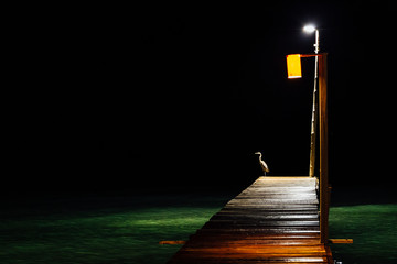 Fotomurales - Bird Perching On Illuminated Pier Over Sea At Night