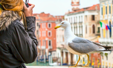 Girl takes a close up photo of a seagull on the bridge - Venice, Italy