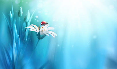 Wall Mural - Surprisingly beautiful soft elegant white flower with buds and ladybug on blue background in rays of light macro. Exquisite graceful easy airy magic artistic image nature, copy space.