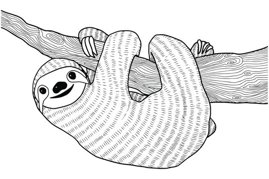 Sloth illustration, drawing, engraving, ink, line art, vector. Sloth on a branch coloring book for adults vector illustration. Anti-stress coloring for adult. Zentangle style. Black and white lines.