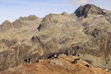 Romantische Alpenlandschaft über dem Splügenpass