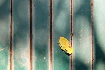 Türaufkleber Schmetterlinge im Grunge old wooden ground pattern background
