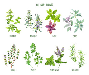 Custom blinds with your photo Set of watercolor cooking herbs, mediterranean cuisine
